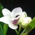 Profile picture of madhuka