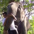 Profile picture of Lasantha rathnayake