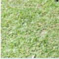 Profile picture of Ruwa...